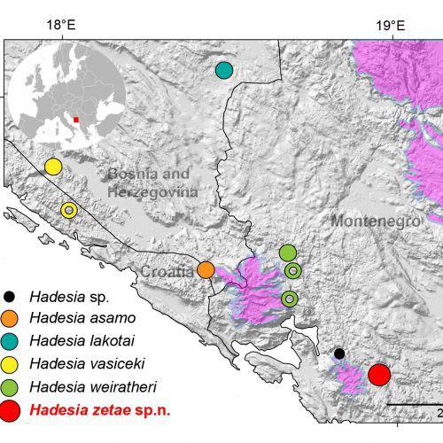 Jamski hrošči so ozko razširjeni endemiti. Neredko so posamezne vrste omejene na eno samo jamo. (iz nagrajenega članka)